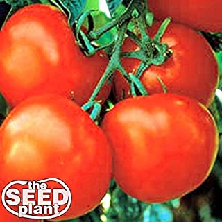 Best marglobe tomato size Reviews