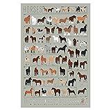 Póster e impresiones de razas de caballos Guía de razas de caballos Pintura en lienzo Arte de la pared de animales Cuadros del hipódromo Salon de estar Decoracion del hipódromo 60x80cm Sin marco