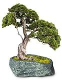 Dahlia Stone Like Handmade Concrete Succulent Planter/Plant Pot/Flower Pot/Bonsai Pot, 4