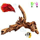 REOUITA Large Aquarium Driftwood, Natural Fish Tank Wood Reptile Climb Branches Decorations Size -11 in -16 in