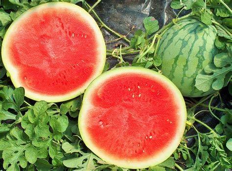 Aamish 10 Bezpestkowe nasiona owoców arbuza