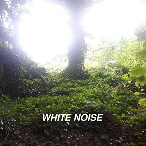 White Noise Collectors & Rain Noise Collectors