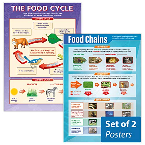 """Food Chains The Food Cycle Poster Set - Pack of 2  Science Posters  Gloss Paper Measuring 33"""" x 235""""  STEM Charts for The Classroom  Education Charts by Daydream Education"""