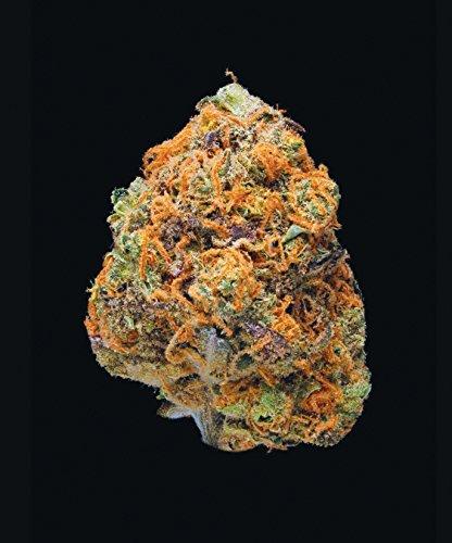 51pCFrDvkeL - Green: A Field Guide to Marijuana: (Books about Marijuana, Guide to Cannabis, Weed Bible)