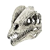 Resin Dinosaur Dilophosaurus Skull Teaching Model Collectibles White