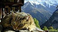 新しいHDYFQACCジグソーパズル大人のための1000個-猫の瞑想-エンターテインメント木製パズルおもちゃ