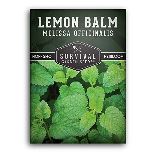 Survival Garden Seeds - Lemon Balm Seed - Non-GMO Heirloom Variety