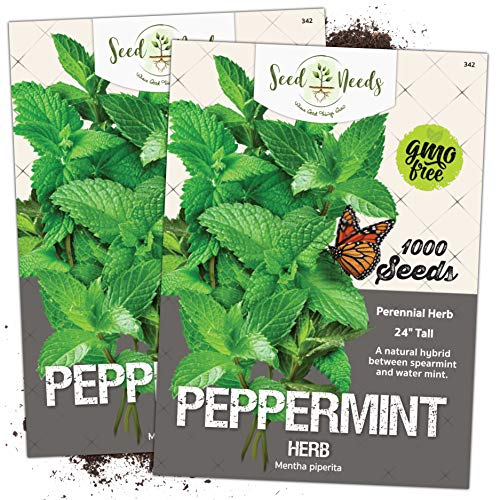 Seed Needs, Peppermint Herb (Mentha piperita) Twin Pack of 1,000 Seeds Each Non-GMO