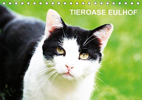 Eulhof (Tischkalender 2019 DIN A5 quer): Eulhof - der Gnadenhof im Mainhardter Wald ist eine Tieroase für eine Vielzahl von liebenswerten Geschöpfen (Monatskalender, 14 Seiten ) (CALVENDO Tiere)