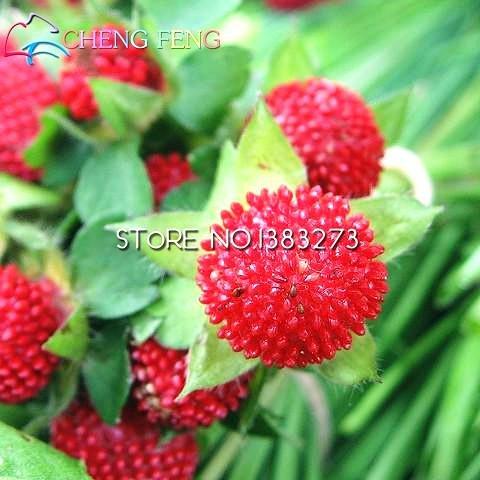 100 Red Giant Framboise Seeds Râpe Berry Graine de Super Big Fruit Graine Strawberry Graines Plantes Bonsai Garden New