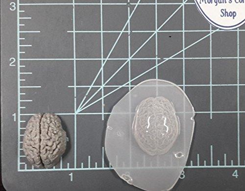 Human Brain (Small) Plastic Mold