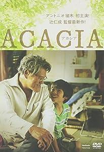 ACACIA アカシア