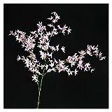 JSJJARD Fleur Artificielle Plastique Multicolore Fleur Artificielle orchidée Fausse Fleur Maison Mariage décor Floral Plantes artificielles Fausse Plante (Color : B)