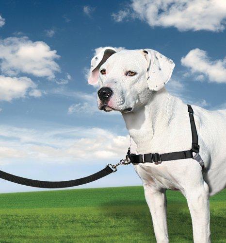 PetSafe arnés para Caminar fácil: Amazon.es: Productos para mascotas
