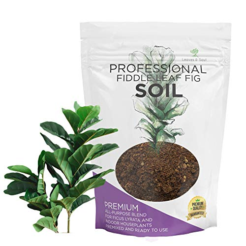 Fiddle Leaf Fig House Plant Soil Premium All Purpose Blend   Ready to Use for Indoor...