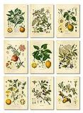 Generic Ink Inc. Fruit Botanical Prints Vintage Wall Art