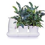 minigarden Basic S Pots, Kit Innovador para Inexpertos para un Cultivo Fácil, Sistema Aut...