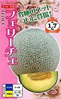 【種子】 メロン フェリーチェ ナント種苗のタネ