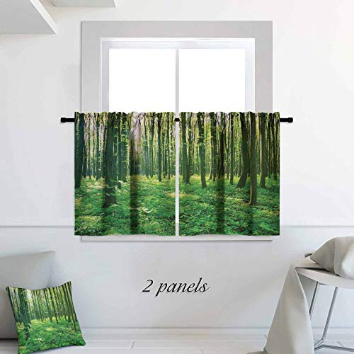 ScottDecor Forest Half Window Curtain Summer Forest with Early Morning Sun Through Trees Scenics Picture 30 x 30 inch Blackout Small Thermal Insulated Window Tier