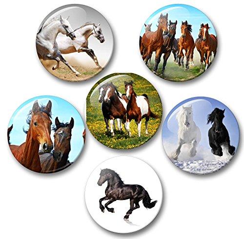 Merchandise for Fans paarden schimmel rap veulen - 6 grote koelkastmagneten Ø 5 cm