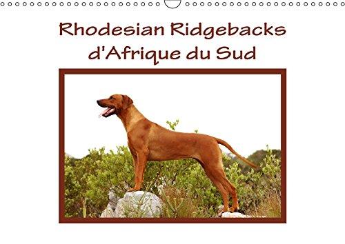 Rhodesian Ridgebacks d'Afrique du Sud (Calendrier mural 2018 DIN A3 horizontal): Rhodesian Ridgebacks photographiés par Anke van Wyk dans leur pays ... 01, 2017] van Wyk - www. germanpix. net, Anke