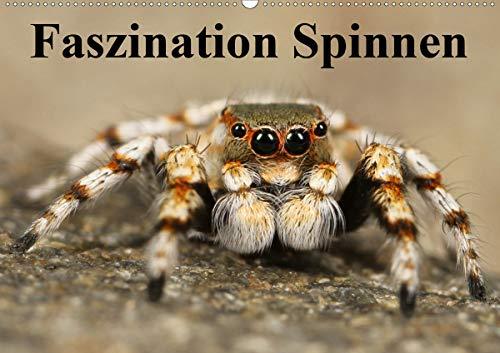 Faszination Spinnen (Wandkalender 2020 DIN A2 quer): Die achtbeinigen Webkünstler aus der Nähe (Monatskalender, 14 Seiten ) (CALVENDO Tiere)