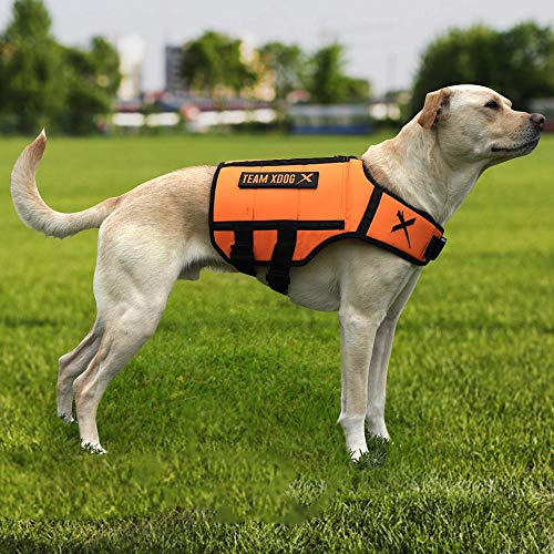 XDOG Weight & Fitness Vest for Dogs - A Weighted Dog Vest Used to Build Muscle, Improve Performance, Combat Obesity & Anxiety - Improve Your Dog's Overall Health & Exercise. (Medium, Orange)