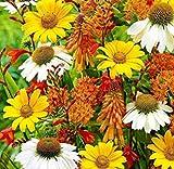 TOMASASeedhouse- 100 unids Margaritas Gigantes Plantas Perennes'Paraíso de la Abeja', semillas de flores semillas perennes resistentes para barkon, jardín, granja