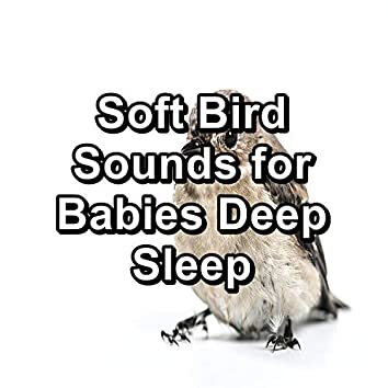 Soft Bird Sounds for Babies Deep Sleep