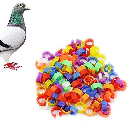 HeroNeo® 100X Gallina de palomas de la pierna Aves Paloma Pájaro Pato de pollitos Parrot Clip Anillos Banda