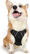 Amazon.es: arnes perro bubs