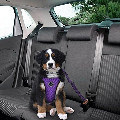 SlowTon Arnés de Coche para Perros con cinturón de Seguridad ...