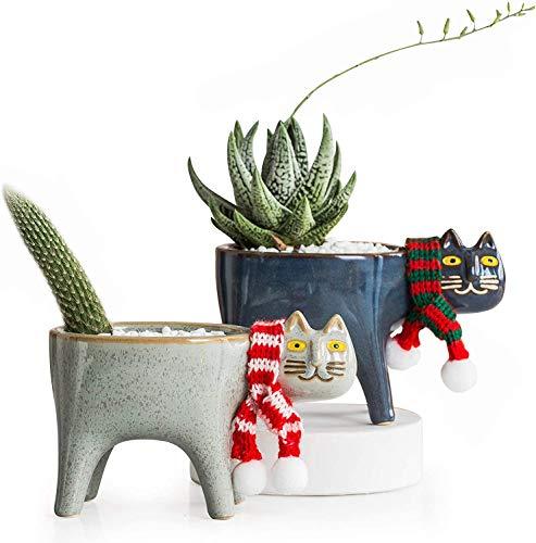 Cat Cactus Succulent Planter