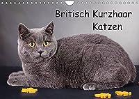 Britisch Kurzhaar Katzen (Wandkalender 2022 DIN A4 quer): BKH Katzen (Monatskalender, 14 Seiten )