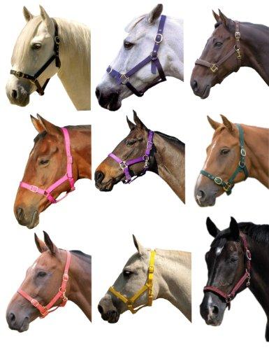 William Hunter Equestrian Eclipse - Capezza in nylon, cinghie regolabili con finiture ottonate, 11 colori disponibili, misura: maxi (cavalli adulti), nero (nero), Pony