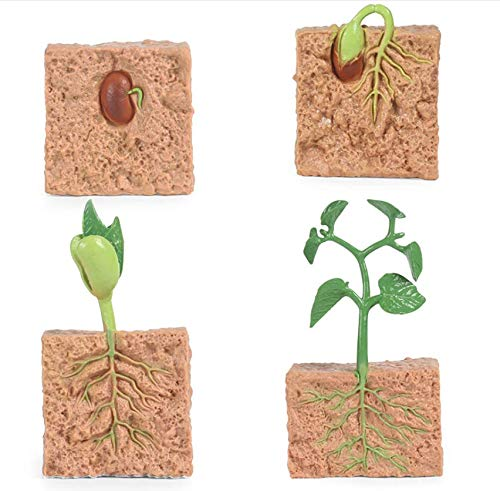 H&W Seed Plant Growth Cycle Statue, Science Collectible Figurines Model,