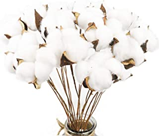CEWOR 20 Pack Really Natural White Cotton Stems Dried Flower Branch for Farmhouse Style Antique Floral Furniture Wedding Decoration (Cotton Stems)