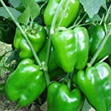 100 Piezas Coloridas Semillas De Pimiento Dulce Deliciosas Semillas De Chile Semillas Vegetales Semillas De Plantas Para Jardín Agrícola Verde Semillas de chile