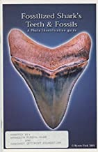 Best fossilized sharks teeth guide Reviews