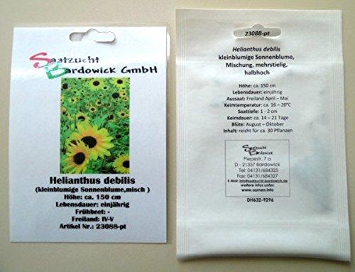 Sonnenblume kleinblumige Mischung Samen Saatgut für ca 30 Pfl. Sonnenblumensamen Sonnenblumensaat