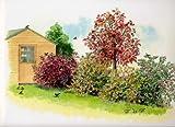 Vogelhecke. bestehend aus je 1* Pflanze: Apfelbeere (Aronia prunifolia). Sanddorn (Hippophae rhamnoides). Eberesche (Sorbus aucuparia). Schneebeere (Symphiocarpus Mother of Pearl®). Fruchtmispel (Cotoneaster franchetii) - zu dem Artikel bekommen Sie gratis ein Paar Handschuhe für die Gartenarbeit dazu