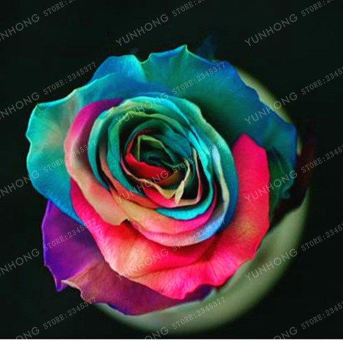 50 Pcs/Sac rares Graines Rose 24 couleurs au choix Belles graines de fleurs vivaces Balcon Jardin en pot Plante bricolage jardin 8