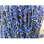 LARGE-BUNCH-PROVENCE-LAVENDER-FLOWERS-DRIED-FLOWER-BOUQUET-300-STEMS-FRAGRANT-WEDDING-CRAFTS-DECORATION-by-Harrington-Marley