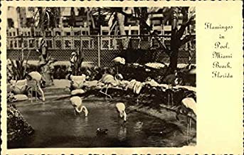 Flamingos in the Pool at Roney Plaza Miami Beach, Florida Original Vintage Postcard