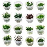 Naqua In Vitro Aquarium Pflanzen - Aquascaping - Wasserpflanzen...
