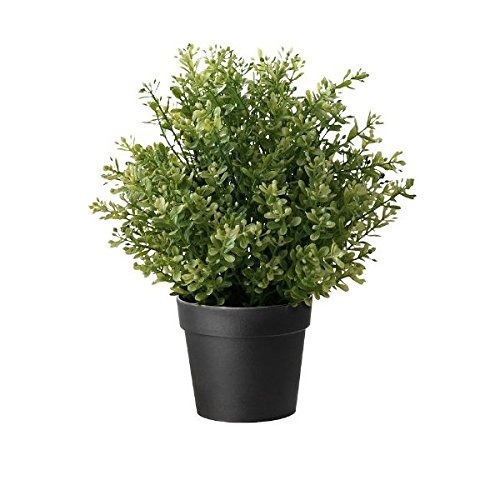 IKEA Artificial Potted Plant, Thyme, 9.5 Inch (1)