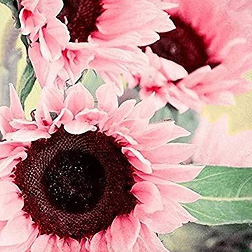 Sytaun Semi Di Girasole, Semi Di Girasole Giganti Premium Per Fiori In Crescita Grandi Teste, 100 Pezzi Semi Di Girasole Rosa Helianthus Giardino Fiorito Pianta Ornamentale Bonsai 100 pz