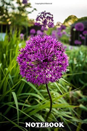 """[画像:Notebook: A Clear Photograph Of A Flower Specifically The Allium , Journal for Writing, College Ruled Size 6"""" x 9"""", 110 Pages]"""