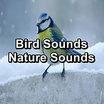 Bird Sounds Nature Sounds