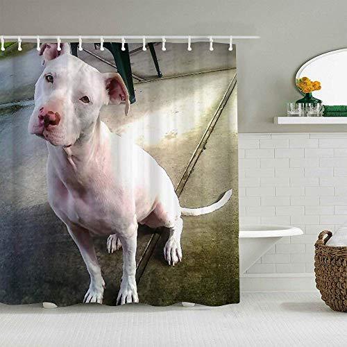 N\A Cortina de Ducha American Pitbull Terrier White White Pit-Bull Cortinas de baño Impermeables Ganchos incluidos - Ideas Decorativas de baño Accesorios de Tela de poliéster